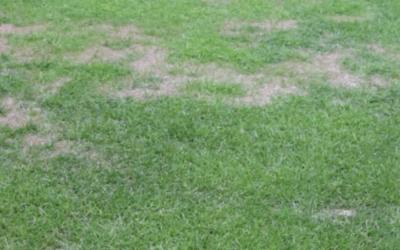 Nanowoda i piłkarskie murawy – czyli jak w ciągu 10 – 12 dni zazielenić pola bramkowe