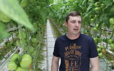 Nanowoda w uprawie pomidorów
